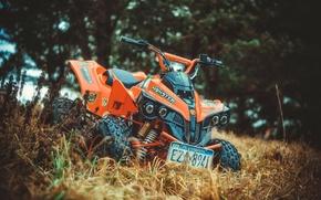 Picture grass, view, ATV