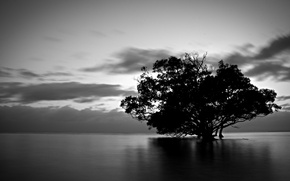 Picture water, clouds, nature, tree, black and white
