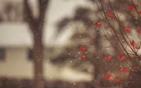 Picture winter, macro, snow, snowflakes, branches, berries, tree, blur, red, Rowan