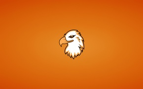 Wallpaper animal, bird, eagle, minimalism, head, Orlan, eagle
