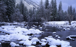 Picture forest, snow, stream