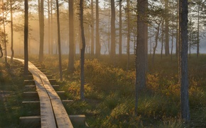 Picture forest, dawn, beauty, reserve, Estonia