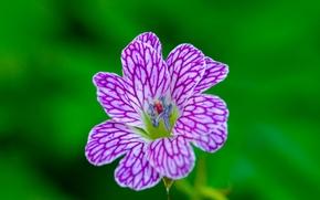Picture flower, pattern, paint, petals
