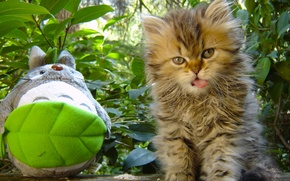 Picture toy, fluffy, kitty