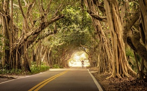 Picture road, nature, cyclist