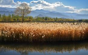 Picture summer, mountains, lake, river, kamyshi