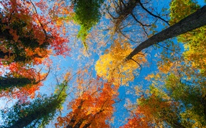 Picture autumn, the sky, leaves, trees, nature, blue, time of the year