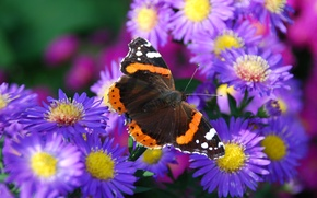 Picture flower, nature, butterfly, petals, moth