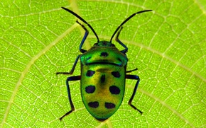 Picture macro, sheet, beetle, insect, scarab
