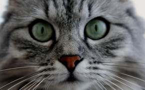 Picture animals, eyes, cats