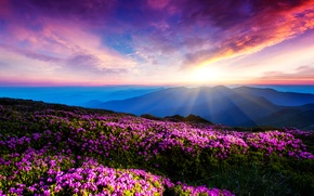 Picture the sky, clouds, rays, sunset, flowers, mountains