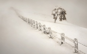 Picture Nature, Winter, The fence, Snow