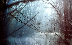 Picture rays, trees, landscape, river