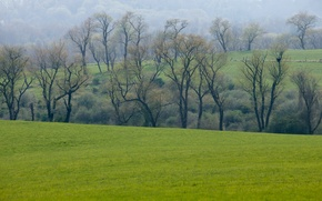 Picture greens, field, forest, grass, trees, spring, meadow