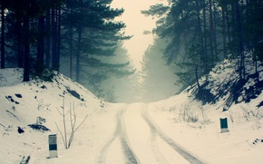 Picture cold, snow, winter, fog, frost, pine, trees, road, nature, silence, haze, forest, branches, the wheel ...