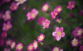 Picture macro, flowers, blur