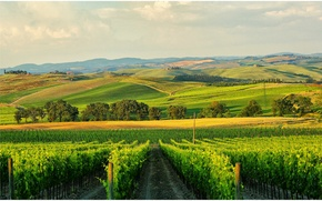 Picture house, hills, Italy, Tuscany, in the province of Siena, vinogradniy