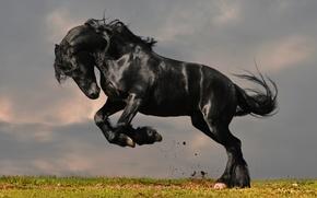 Picture grass, horse, horse, frieze