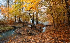 Wallpaper trees, autumn nature, places, photos, leaves