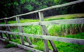 Picture landscape, Bridge, Ukraine, River, Forrest Park