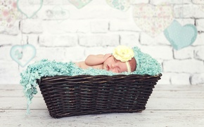 Picture flower, basket, child, baby, sleeping, girl, baby