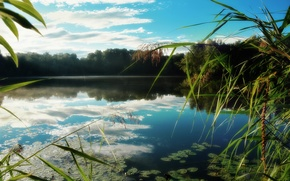 Picture forest, lake, reflection, reed