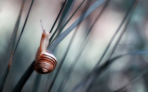Picture macro, grass, snail