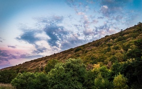 Picture forest, the sky, clouds, mountains, nature, green