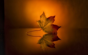 Picture surface, sheet, reflection, background, autumn