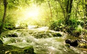 Picture greens, river, sun.light, rapid