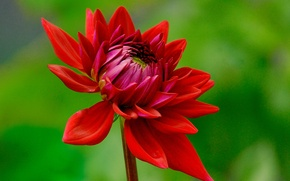 Picture flower, nature, plant, petals, Bud
