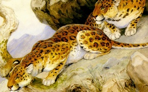 Picture predators, art, painting, leopards, Georges-Frederic Rotig