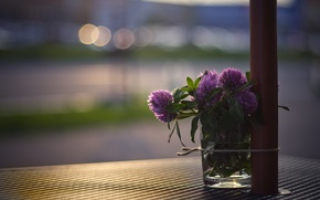 Picture macro, light, flowers, glass, glare, table, street, bouquet, clover