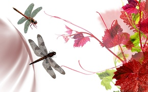 Picture leaves, collage, color, dragonfly, grapes