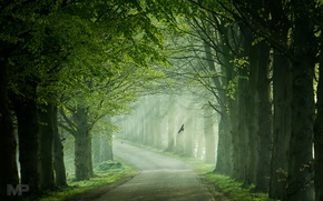 Picture road, light, trees, birds, spring