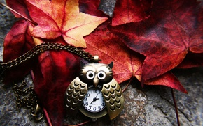 Picture autumn, leaves, owl, watch, yellow, red, chain, suspension, Burgundy, crimson