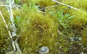 Picture macro, moss, plants, shell