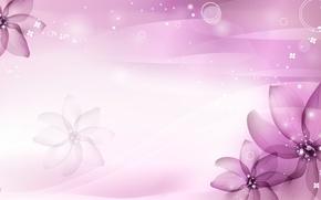 Picture purple, flowers, petals