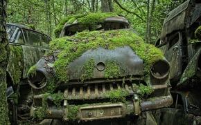 Picture machine, moss, scrap