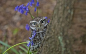 Picture tree, owl, looks, owlet