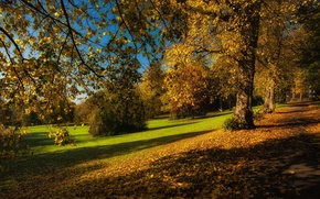 Picture autumn, leaves, trees, branches, Park