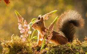 Picture flowers, nature, animal, moss, protein, rodent