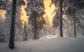 Picture winter, forest, snow, trees, the snow, dawn