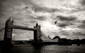 Wallpaper tower bridge, bridge, UK, London, black and white, the city, Thames, birds, the sky, river, ...