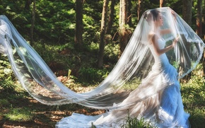 Picture forest, girl, dress, Asian, forest, the bride, veil, dress, bride