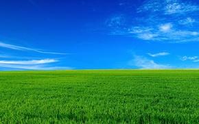 Picture field, the sky, landscape, horizon