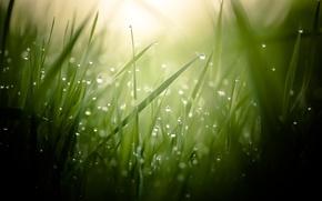 Picture grass, drops, macro, Rosa, blur