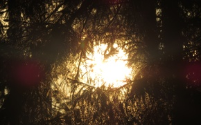 Picture Sunset, The sun, Nature, Tree, Branch