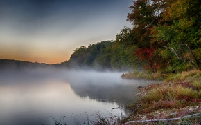 Picture autumn, forest, trees, fog, lake