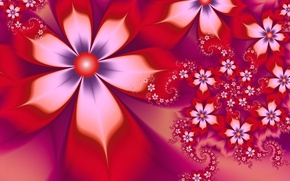 Picture white, flowers, red, petals